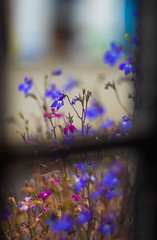 The window and flowers .... (Julie Greg) Tags: window flower flowers canon nature colours details summer