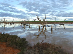 Evening Reflections, Turoar, Victoria (Diepflingerbahn) Tags: reflection brackish lakes water turoar chinkapook victoria evening panasoniclumixdmctz80 mallee landscape deadtrees