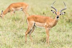 _DSC4055.jpg (wim_tavernier) Tags: africa transmara kenya