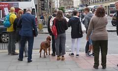 Street scene (Elisa1880) Tags: street photography streetlife people mensen edinburgh scotland schotland