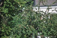 Національний заповідник Софія Київська, серпень 2018 InterNetri.Net Ukraine 388 (InterNetri) Tags: національнийзаповідниксофіякиївська україна ukraine internetri qntm