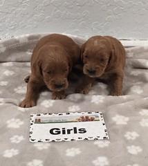 Gretta Girls 8-11