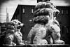 Chiens de garde (patoche21) Tags: animal animalsauvage asie asiedelest japon kamakura lion patrimoine voyages architecture patrimoineculturel statue patrickbouchenard japan asia eastasia travel monochrome noiretblanc blackandwhite bw nb sculpture pierre stone carving