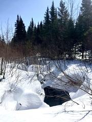 Spring? (lunatiff) Tags: spring winter canada quebec snow neige