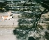 000075110002 (JimmyShen.TW) Tags: 旅遊 自助 底片 負片 街景 街道 光 影 樹 柴犬 しばけん しばいぬ shibaken shibainu tree light shadow street streetview travel selfservice trip 120 film asahi pentax67 pentax 67 6x7 fujifilm pro400h iso400 ペンタックス 中判 中判カメラ 修善寺 修禪寺 修禅寺 伊豆 静岡県 静岡 靜岡 日本 しゅぜんじ いず izu shizuoka japan 2017 平成29 collection 自選集