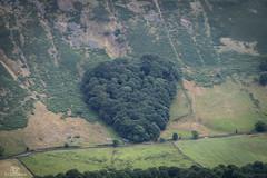 The Heart of Tebay. (CamraMan.) Tags: heart tebay westmoreland cumbria m6 plantation sonya7 fotodiox canon70200f4 ©davidliddle ©camraman bbccumbria trees