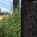 Santa Rosa Wildfire Recovery