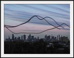 3 balloon dawn (Andrew C Wallace) Tags: hotairballoon melbourne victoria australia multipleexposure thephotontrap olympusomdem5 m43 microfourthirds