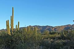Morning in the Desert (craigsanders429) Tags: mountains arizona arizonamountains tucsonarizona santacatalinamountains cactus saguarocactus desert sonorandesert