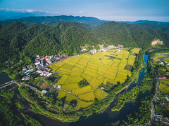 關西稻田空拍 (YUSHENG HSU) Tags: asia earth 台灣 panorama botany agriculture plant drone 景色 亞洲 sky ripe 航空 風景 豐收 landscape 農作 crop birds 夏季 夏天 aerial hsinchu picturesque 農事 scenery 農業 botanical seed cultivated mountain sunny natural high nature land grain 稻田 explore bank morning 自然 panoramic flora cereal 山峰 paddy view 空拍 河床 景觀 taiwan 山 關西鎮 新竹縣 rural angle 收穫 harvest skyline daytime blue rice prospect golden river 田地 day 鳥瞰 summer farming eye 鳥瞰圖 河岸 field