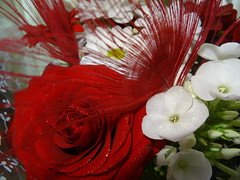 Peacock Rose (LadyRaptor) Tags: red white flower flowers floral bouquet bunch gold glitter sparkly sparkling glittery glittering peacock feather feathers birthday gift present down to earth florist