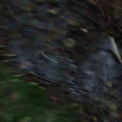 creek (rana.way) Tags: icm intentionalcameramovement creeks creek blur 500x500 squareformat