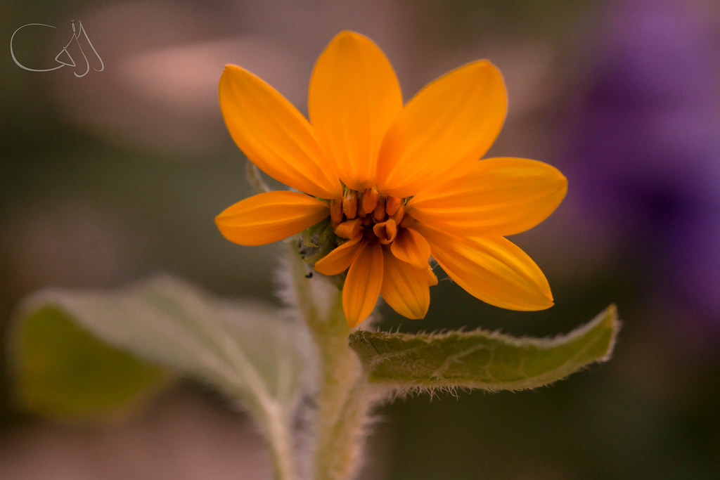 The World S Newest Photos Of Fleur And Tournesol Flickr Hive Mind