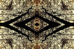 eye (luci_smid) Tags: ornament trees symbol texture forest fantasy image outline impression graphics