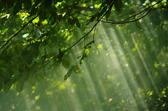 Rays of light (Baubec Izzet) Tags: baubecizzet pentax nature light forest green