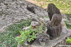 2018.08.03 Wspólne kontemplowanie (Meteor Foto) Tags: meteor meteorfoto piątkoweimpresjemeteora kot rzeźba świątek kontemplacja wiosna spring cisza zieleń trawa kwiaty kamienie kompozycja kudłacze