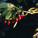 Close up of cherry branch. Blurry background