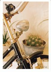 une bicyclette 2 (Noël Café) Tags: harfcamera コダックポートラ400 olympuspen olympuspenfmount 35mmフィルム colorfilm ネガフィルム negativefilm らんすみれ 135フィルム ポートラ iso400 135 オリンパスpenf colornegative トコリエ オリンパスペンfマウント penfmount penfマウント オリンパスペンf ハーフカメラ 花市 フィルム film ネガ zuiko tocolier オリンパス olympuspenf40mmf14 オリンパスpenfマウント colornegativefilm olympus カラーネガフィルム カラーフィルム olympuspenfマウント ペンfマウント ズイコー コダック portra kodakportra400