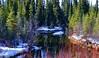Spring! (JLS Photography - Alaska) Tags: alaska alaskalandscape landscape lastfrontier landscapes water watercourse stream streams jlsphotographyalaska trees sprucetrees forest snow outdoors spring april woods painting painterly digitalart digitalmanipulation wood tree grass rock serene pond