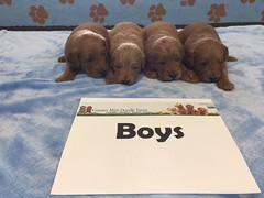 Dakota Boys pic 2 4-22