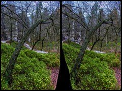 Crippled tree at the Tisa Walls 3-D / CrossEye / Stereoscopy / HDRaw (Stereotron) Tags: sandstone mountains nationalpark tisa walls felsenwnde europe germany deutschland crosseye crossview xview pair freeview sidebyside sbs kreuzblick 3d 3dphoto 3dstereo 3rddimension spatial stereo stereo3d stereophoto stereophotography stereoscopic stereoscopy stereotron threedimensional stereoview stereophotomaker stereophotograph 3dpicture 3dimage canon eos 550d chacha singlelens kitlens 1855mm tonemapping hdr hdri raw
