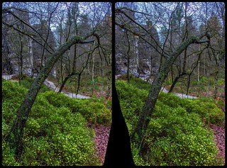 Crippled tree at the Tisa Walls 3-D / CrossEye / Stereoscopy / HDRaw