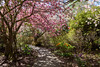 Walking Under Pink (Jocey K) Tags: newzealand nikond750 southisland christchurch gardens trees plants sky shadows ilamgardens rhododendrons blossom cherryblossom pathway