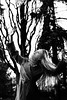 Fade History Brush11 (valeriabu) Tags: girl black white photo tree magical horror mysterious beautiful ukraine