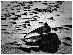 Oregon Coast (jcurtis4082) Tags: white black bw consulab coast oregon blowing sand beach mussel minimalism camera shell wind