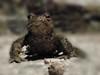 A visitor came at night, it's definitely spring!! WoooHooo, I  love that my world is awakening! (evakongshavn) Tags: toad animal springishere springisitreallycoming spring night nightshot nightphotography 7dwf