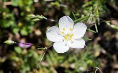 Narrow (LeftCoastKenny) Tags: edgewoodpark flower wildflower