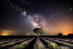 Via Láctea en Brihuega (V1) (Yorch Seif) Tags: vialactea milkyway noche night nocturna nocturnal lightpainting longexposure largaexposicion estrellas stars d7500 tokina1116
