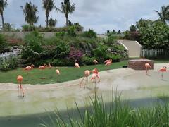 IMG_4611 (Man O' World) Tags: baha mar nassau bahamas beach turtle resort