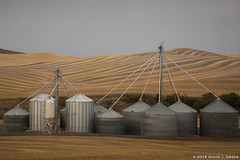 Morning Silos in the Palouse (David J. Greer) Tags: bcpa photo workshop adventure travel palouse washington morning grey patterns texture silos fields wheat hills silver margo pinkerton arnie zann