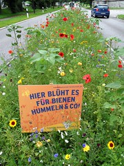 Wildflowers - in the middle of the road. (Christa_P) Tags: nature outdoor flora flowers blumen wildflowers murnauamstaffelsee bavaria bayern germany 7dwf signspostersoradvertisements crazytuesdaytheme