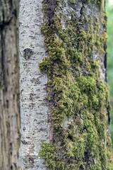 a closer look (2/2) (steveleenow) Tags: kwantlen kc kuc kpu kwantlencollege kwantlenuniversitycollege kwantlenpolytechnicuniversity surrey surreybritishcolumbia surreybritishcolumbiacanada surreycanada surreybc surreybccanada bc britishcolumbia britishcolumbiacanada earth tyneheadpark tynehead trees rideau idea idea1100 interdisciplinaryexpressivearts interdisciplinaryfoundations seedsofwondernaturecommunityandcreativity tree forest nature ideas idea1100idea1100interdisciplinaryfoundationsinterdisciplinaryexpressiveartsseedsofwondernaturecommunitycreativitynaturewondercommunity creativity creative authenticity ecology culture cultural expression passion purpose emotion explore exploration discovery park surreybccanadabcbritishcolumbiacanadasurreybritishcolumbiasurreybritishcolumbiacanada idea1100interdisciplinaryfoundations seedsofwondernaturecreativitycommunity community canada northamerica