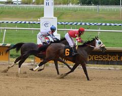 "2018-07-22 (35) r2 Weston Hamilton on #6 Shecor for show - 3rd (JLeeFleenor) Tags: photos photography md horse marylandracing jockey جُوكِي ""赛马骑师"" jinete ""競馬騎手"" dżokej jocheu คนขี่ม้าแข่ง jóquei žokej kilparatsastaja rennreiter fantino ""경마 기수"" жокей jokey người horses thoroughbreds equine equestrian cheval cavalo cavallo cavall caballo pferd paard perd hevonen hest hestur cal kon konj beygir capall ceffyl cuddy yarraman faras alogo soos kuda uma pfeerd koin حصان кон 马 häst άλογο סוס घोड़ा 馬 koń лошадь outside outdoors"