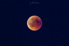 Blood moon (JanMNielsenPhoto) Tags: bloodmoon blodmåne moon måne eclipse nikon nikonphotography d7200 viewbug naturephotography natur naturfoto nature
