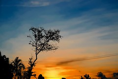 Sunset (Carlos A. Aviles) Tags: sunset ocaso atardecer cielo sky orange naranja azul blue tree arbol
