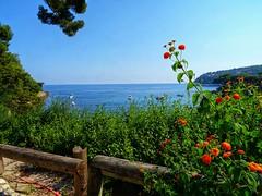 (nissmag) Tags: côtedazur saintjeancapferrat paysage mer fleurs été frenchriviera borddemer seascape waterscape