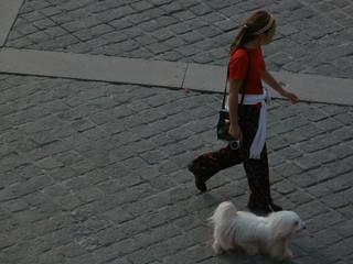 Parisian dog P7120318