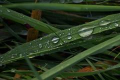 IMG_9246 (Lightcatcher66) Tags: green makros lightcatcher66