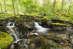 Pine Marten Country (Alastair Marsh Photography) Tags: forest woodland woods wood river stream rock rocks tree trees landscape landscapephotography scotland scottishhighlands scottishlandscape pinemarten