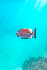 Heron Island Snorkel Underwater-45 (Quick Shot Photos) Tags: aquatechimagingsolutions canon canoncollective heronisland padi queensland scuba underwater snorkel bogie australia au