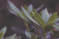 Green (izzistudio) Tags: nature rhododendrons plant garden green botanical summer macro canon flickr 600d izzistudio