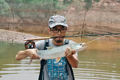 DSC_0240 (photogonia) Tags: ningyu catch caught yellowcheek carp 鳡鱼 fishing flyfishing tip bait cina hunan huaihua simms freshwater xiangxi lake