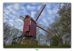 DE NIEUWE PAPEGAAI in BRUGGE (régisa) Tags: bruges brugge papegaai nieuwepapegaai molen moulin windmill mill belgique westvlaanderen kruisvest