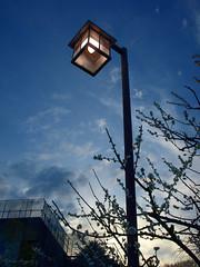The street light (DameBoudicca) Tags: tokyo tokio 東京 japan nippon nihon 日本 japón japon giappone shiba shibapark shibakōen 芝公園 streetlight gatlampa strasenlaterne strasenlampe réverbère lampadaire lampione farol 街灯 がいとう evening kväll afton abend soir sera 夕 ゆう crepúsculo bluehour blåtimmen blauestunde horaazul heurebleue orablu ブルーアワー