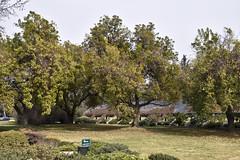 Visita al Papá_JCV4878 (DelRoble_Caleu) Tags: parque del recuerdo cementerio región metropolitana delroblecaleu julio carrasco valenzuela