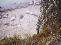 jasper 2017 011 (adamlucienroy) Tags: jasper jaspernationalpark nationalpark forest gh4 panasonic telephoto leica primelens prime 25mm f14 alberta edmonton yeg yegdt canada